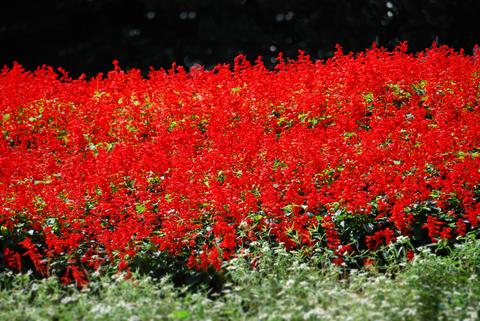 20081019_flower-2.jpg