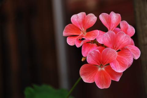 20081019_flower.jpg